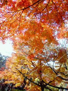 鎌倉は紅葉まっさかり