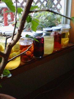 果実のお酒で色とりどり