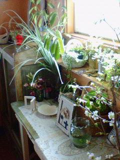 お花屋さんみたいなお部屋