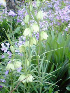 鎌倉のお花、見頃です