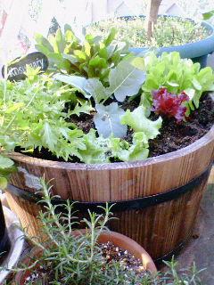 菜園のある暮らし