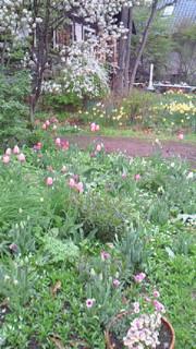 萌黄の村はお花でいっぱい