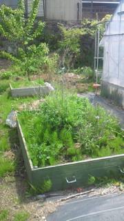 ハーブの庭の楽しみ