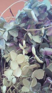 紫陽花のドライフラワー(2)