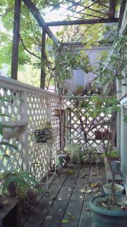 夏から秋へ、我が家のベランダ