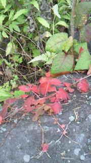 秋の森は楽しみいっぱい