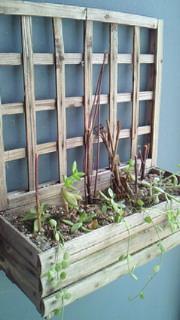 多肉植物、植えかえしてみました。