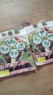 秋の野菜、種蒔きしたら?