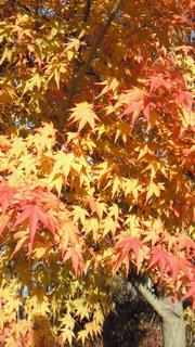 いよいよ紅葉の季節