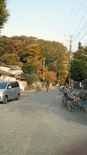 今日の鎌倉、紅葉はこんな感じ