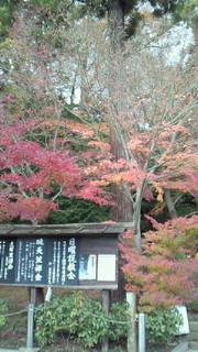 今日の北鎌倉、円覚寺