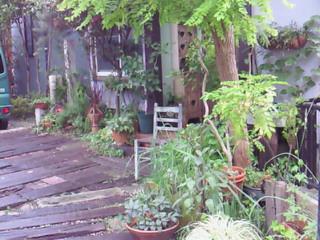 我が家の夏の庭